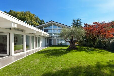 modern garden: House, modern architecture, beautiful garden with old olive tree Stock Photo