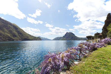 wisteria: View of the Lugano lake in the spring Stock Photo