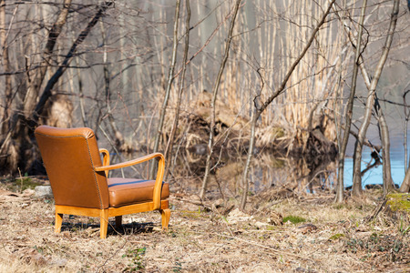 rear view: Vintage armchair in an autumn forest