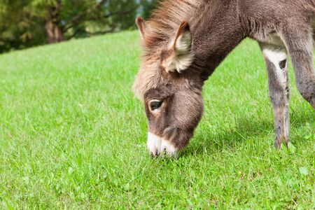 Small sweet donkey in a field 版權商用圖片