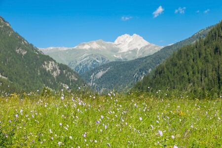 Alpine landscape with flowered meadow and mountain Archivio Fotografico