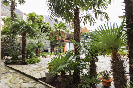 Garden outside villa on a winter day. Nobody inside Standard-Bild - 114300009