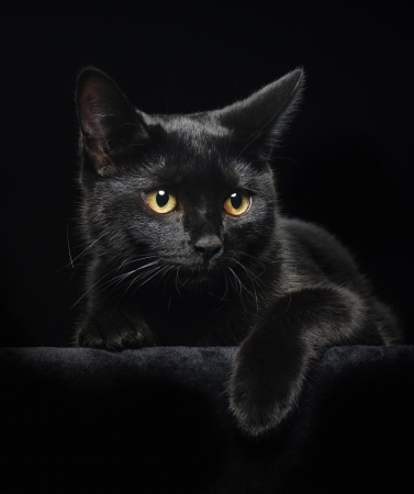 cat eye: Black cat with yellow eyes on black background