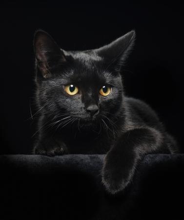 gato negro: El gato negro con ojos amarillos sobre fondo negro Foto de archivo