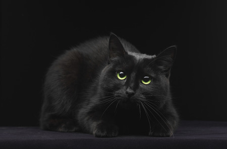 ojos negros: Gato negro con ojos verdes sobre fondo negro