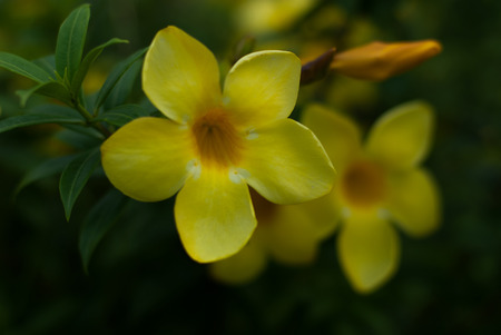 lading: Yellow flowers