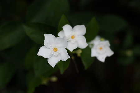 bark carving: White flowers Stock Photo