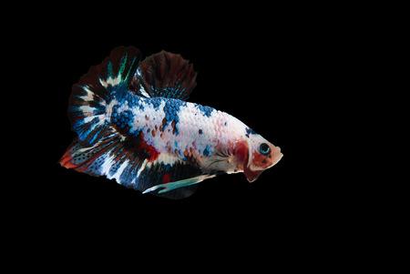 lading: betta fish