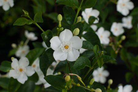 lading: Flower input
