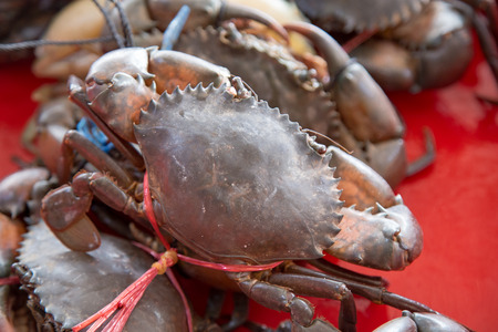 Crabs for sale on the market.