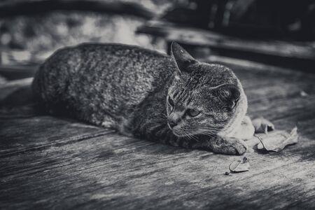 Kitten, resting cat on a floor.