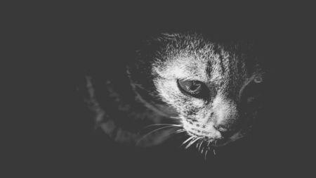 Cat in the dark.
