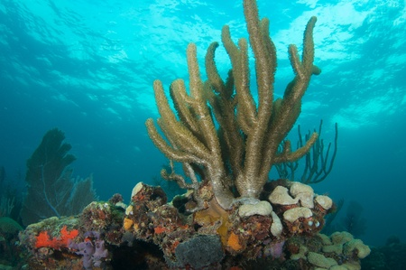 Coral Reef Composition featuring soft corals picture taken in south east Florida.