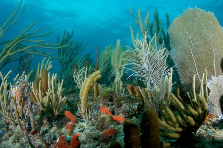 Coral Reef Compostion, picture taken in south east Florida. Stock Photo