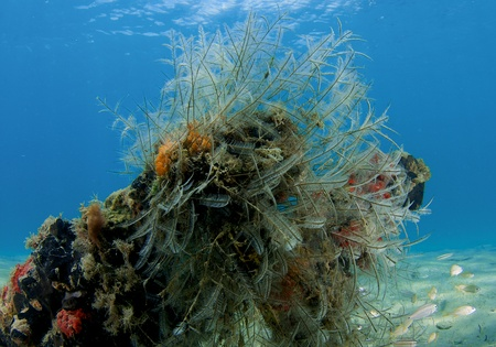 nekton: Hydroids and other inverterbrates making their home on debris covering an otherwise sandy bottom. Stock Photo