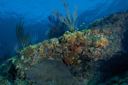nekton: Reef Composition picture taken in south east Florida.
