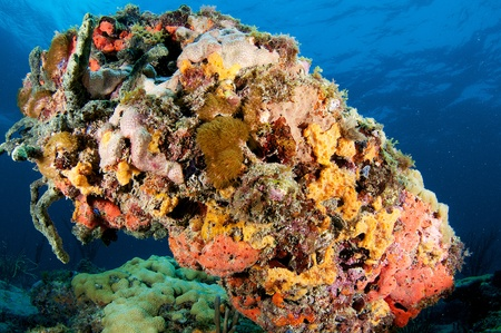 The underside of a coral outcropping showing heavy coral growth. Stock Photo