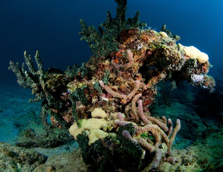 nekton: Oddly shaped coral, picture taken in south east Florida.