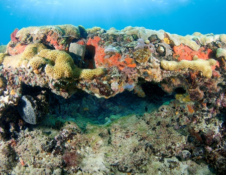Coral legde picture taken in south east Florida. Stock Photo - 12755701