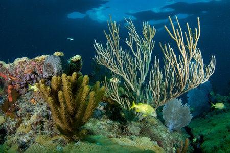 Coral Reef Composition, picture taken in south east Florida.