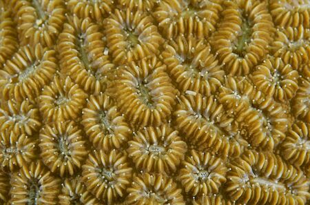 Macro of coral polyps, picture taken in south east Florida. photo