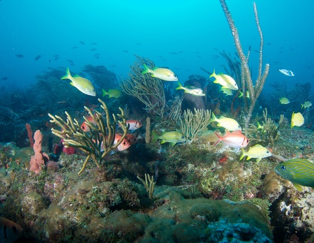 gorgonian: Fish aggregation, picture taken in Boca Raton Florida. Stock Photo