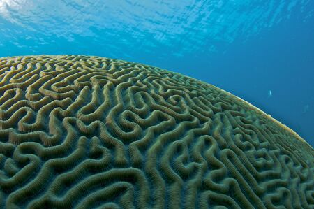 Brain Coral Dome, picture taken in south east Florida