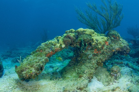 elkhorn coral: Coral Arch, picture taken in south east Florida