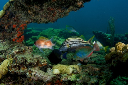 nekton: Six different species of fish all under one coral arch  Stock Photo