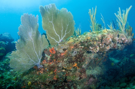 nekton: Reef Composition with Sea Fans and Sea Rods