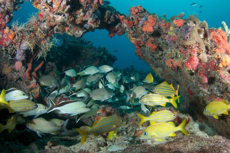 nekton: Fish aggregation on a reef in south east Florida.