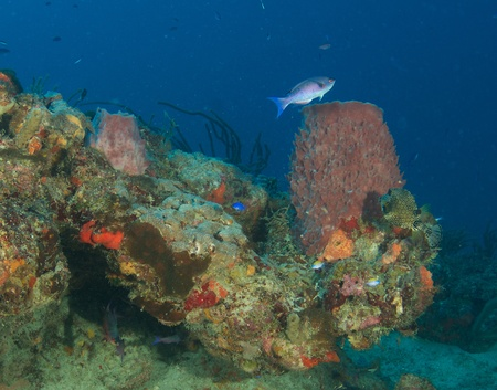 nekton: Reef Composition picture, taken in south east Florida.