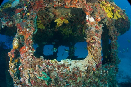 wheel house: Outside the wheel house of an old tug, all surfaces encrusted with coral growth.