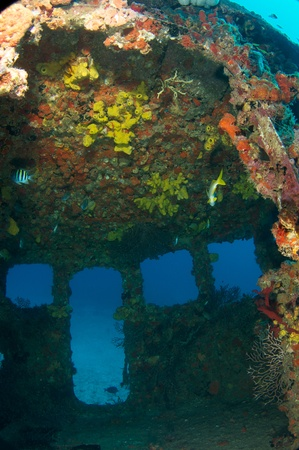Inside the wheel house of an old tug, all surfaces encrusted with coral growth.  photo