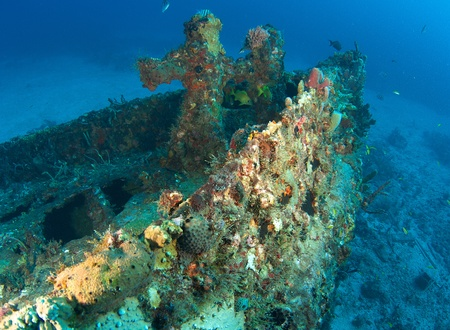 reeffish: Bow section of an old tug, all surfaces encrusted with coral growth.