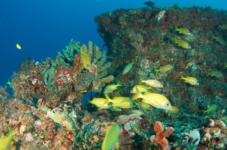 oceanography: Fish aggregation on an artificial reef.