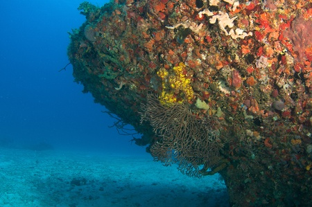 reeffish: Coral encrusted hull of an artificial reef, south east Florida.