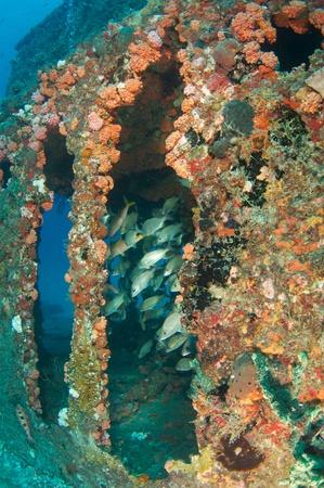 Fish aggregation in an artificial reef. Reklamní fotografie