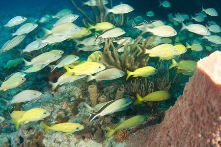 nekton: Fish aggregation over a reef in south Florida.