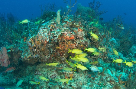 reeffish: Reef Composition, picture taken in south east Florida.