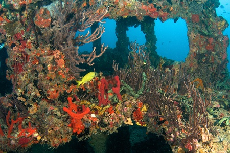 nekton: Behind of the wheelhouse of an artificial wreck named the Berry Patch Stock Photo
