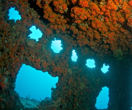 ship wreck: Wheelhouse of an artificial reef encrusted with Red Cup Coral. Stock Photo