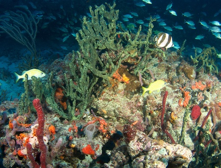 nekton: Reef Composition in picture in south east Florida.