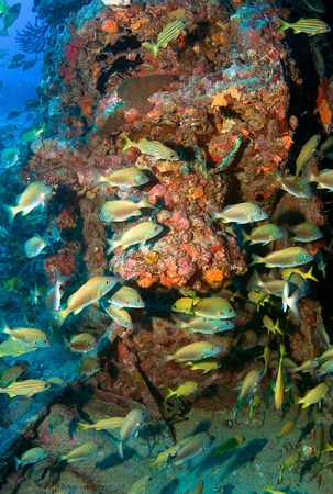 ship wreck: Vertical Composition of fish aggregation on an artificial reef in south east Florida.