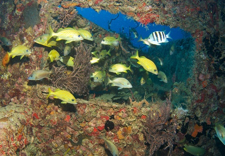 nekton: Fish aggregation in an artificial reef. Stock Photo