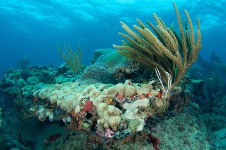 nekton: Reef Ledge, picture taken in south east Florida     Stock Photo