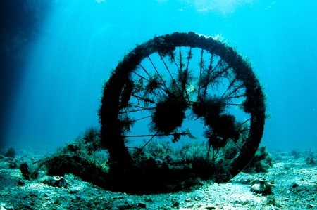 Discarded bicycle tire with marine growth in the intercoastal waterway, Palm Beach County, Florida  photo