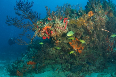 Reef Composition picture taken in south east Florida. Stock Photo - 15344202