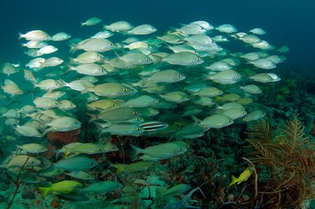 An aggregation of various fish species swimming over a reef.