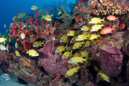 A variety of fish species on a coral reef.